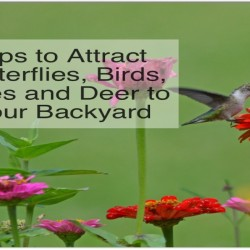 Attract birds to your backyard