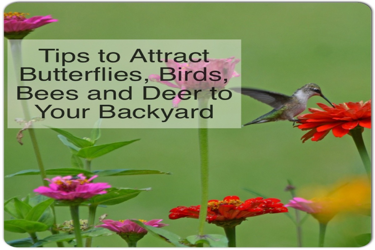 tips to attract butterflies birds bees and deer to your yard