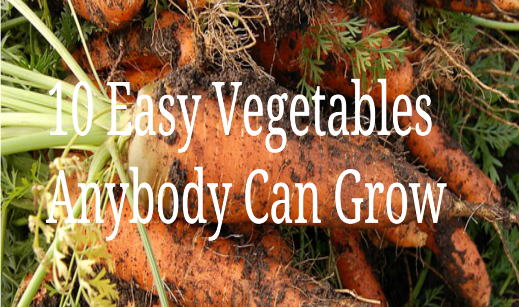 10 Easy Vegetables Anybody Can Grow