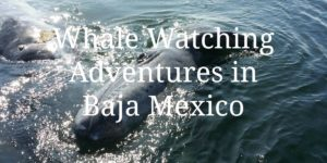 Whale Watching Adventures in Baja Mexico