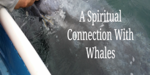 A Spiritual Connection With Whales