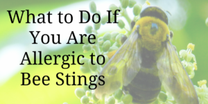 What to Do If You Are Allergic to Bee Stings